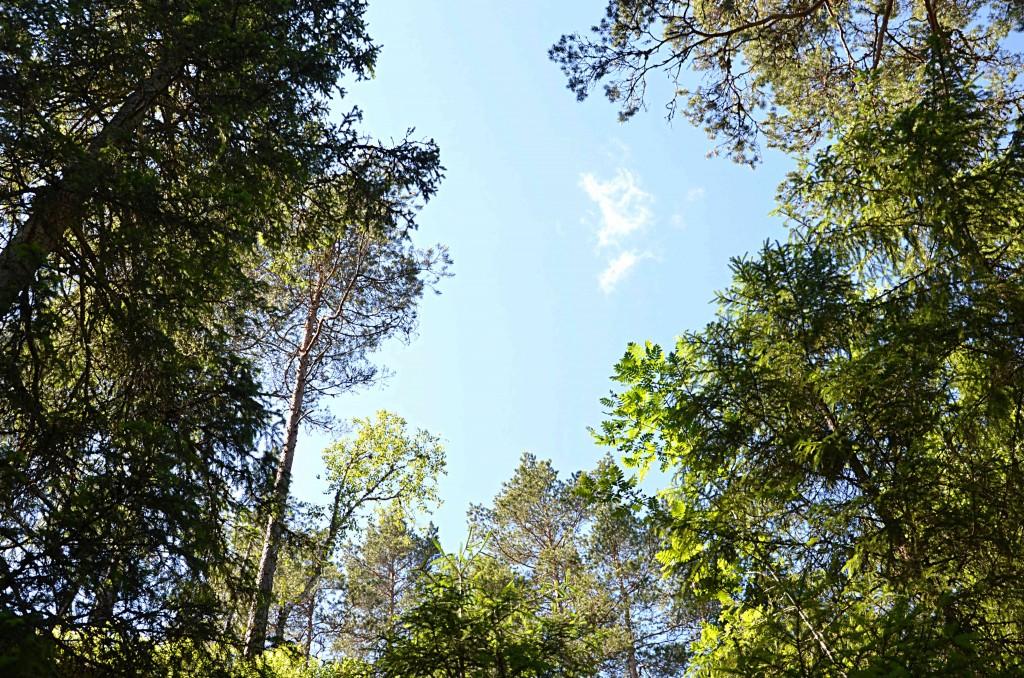 Träd och koldioxid