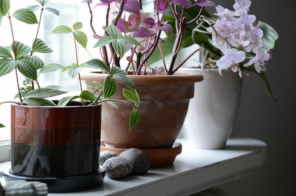 Miljövänliga krukväxter