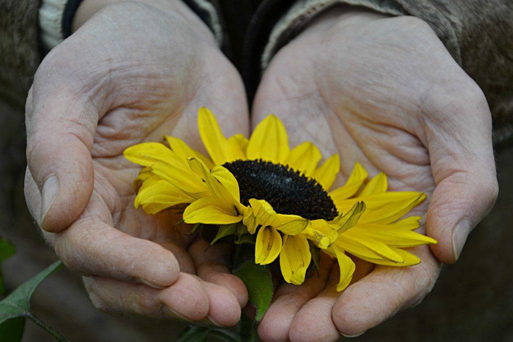 handavtryck av positiv miljöpåverkan