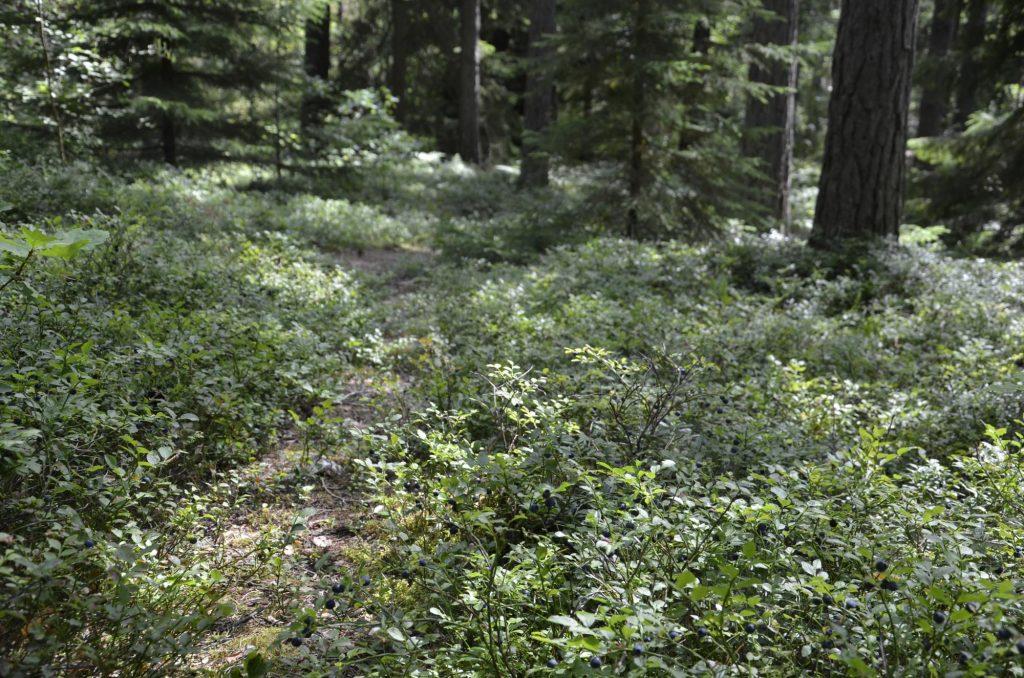 Att inspireras av skogen