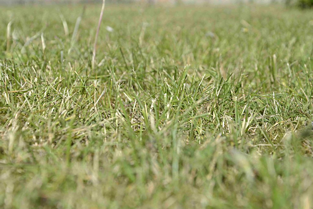 Skörda gräs