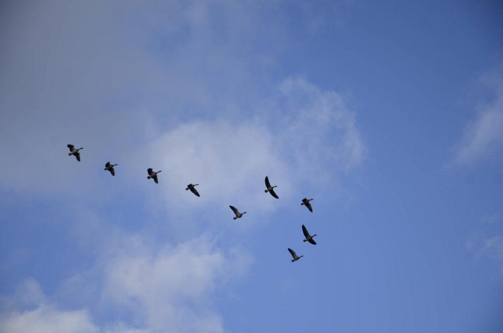 Förunderliga fåglar