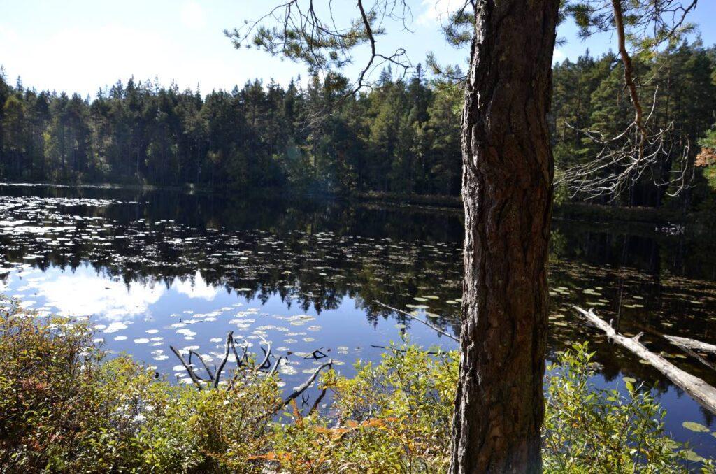 Nationalparker och naturreservat. Bild från näckrossjö i Norra Kvill.