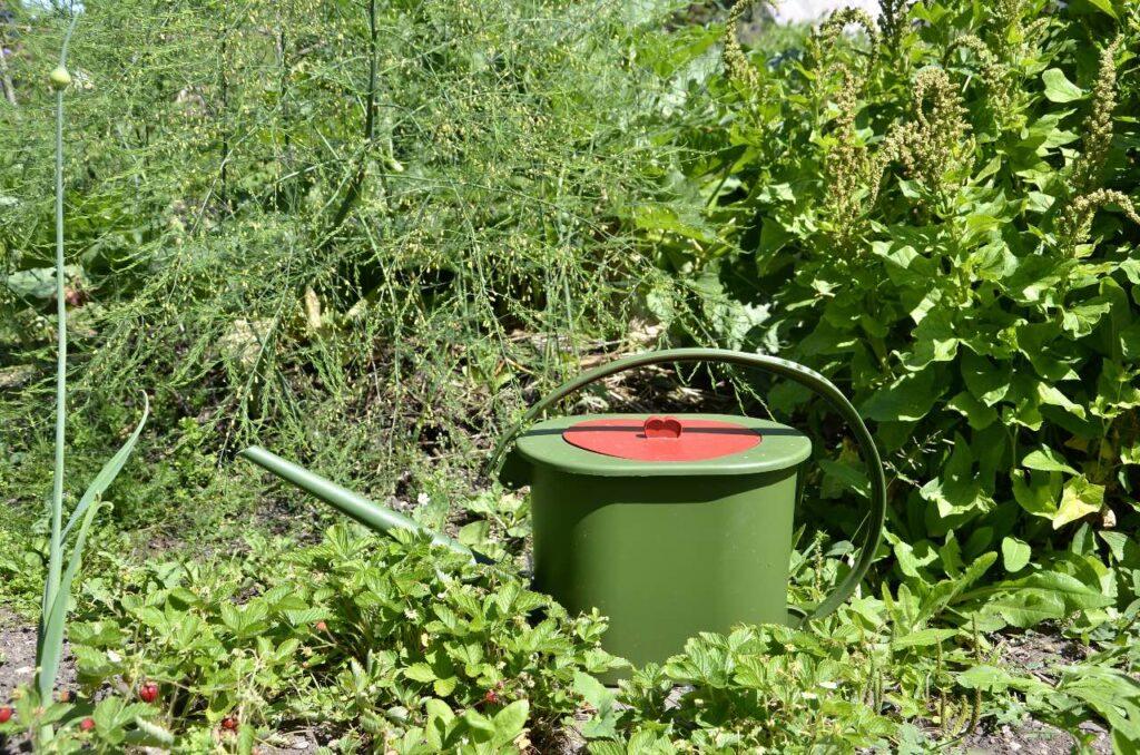 Kom igång med guldvatten genom Guldkannan Towa. Bild på Vattenkanna med guldvatten mitt ibland prunkande växter.