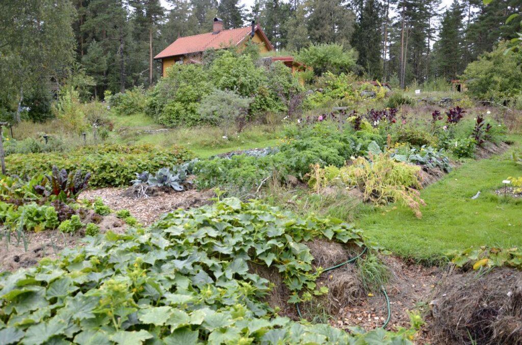 Åfallet skogsträdgård. Bild från permakulturodlingen.